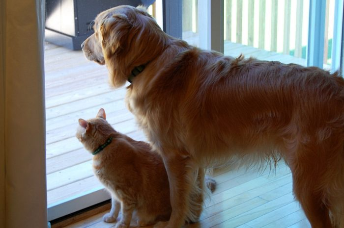 Wordless Wednesday: Best Buddies?