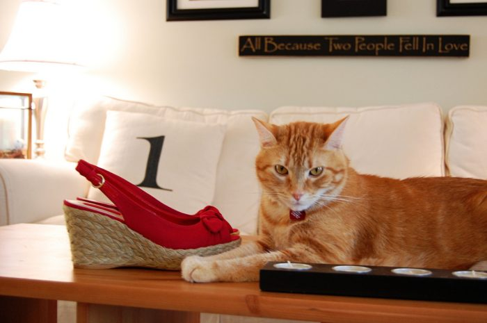 Wordless Wednesday: Pancake likes red shoes too