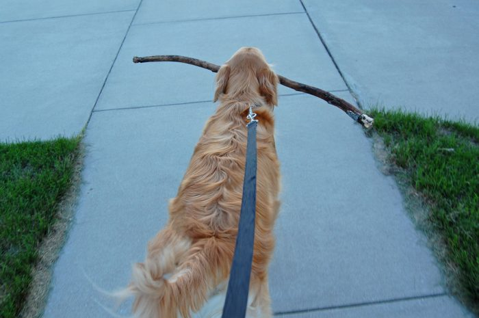 Wordless Wednesday: Stick Obsessed