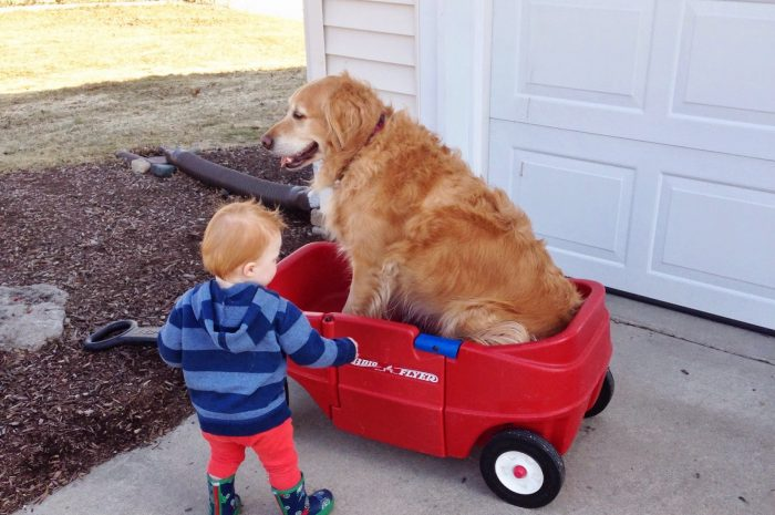 Trucks and wagons and puppy-dog tails