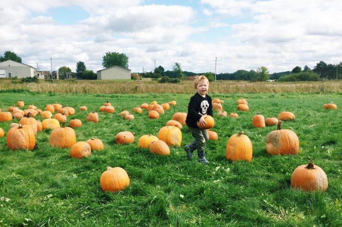 Pumpkin Patchin'