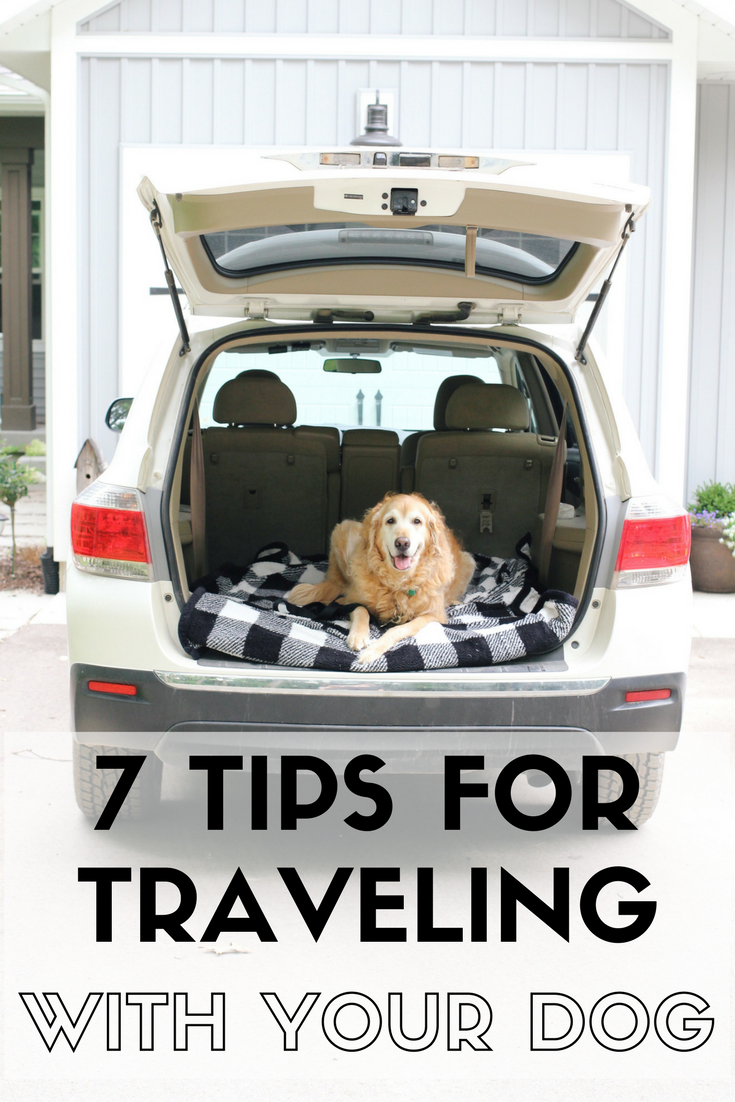 7 Tips for Traveling with Your Pets 7 Tips for Traveling with Your Pets new photo