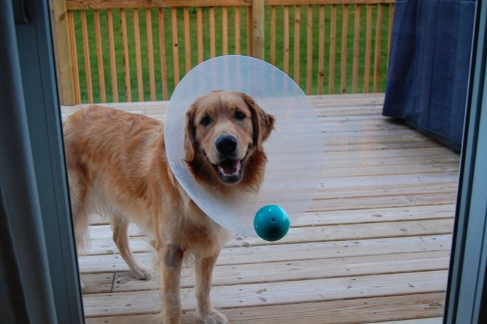 Wordless Wednesday: Make that cone work for you!