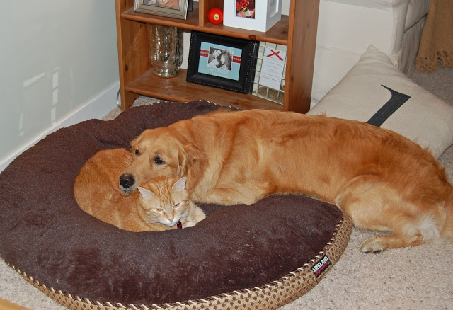 Wordless Wednesday: Snuggle Buddies