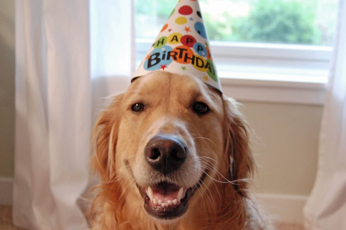 Happy Birthday Wrigley!