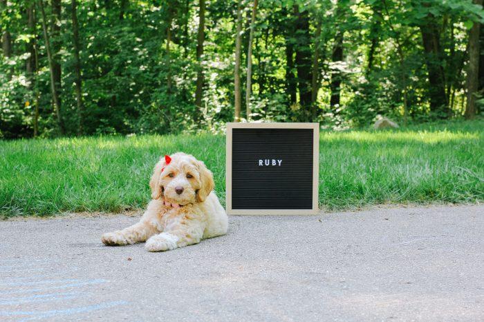 Meet Ruby!